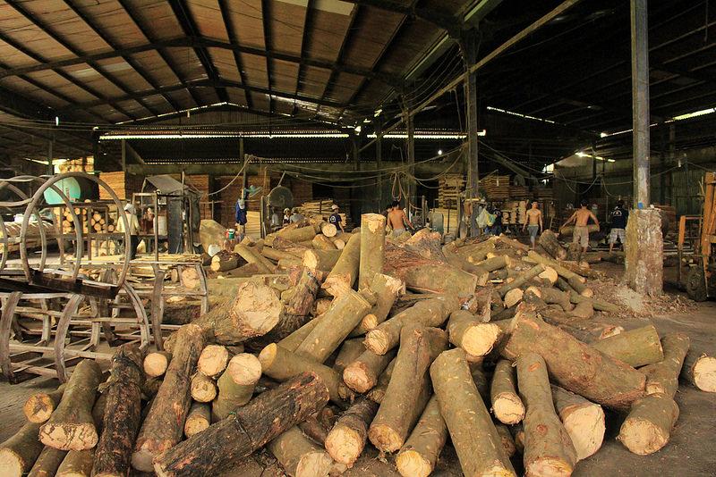 Nhà máy sản xuất gỗ cao su của Nguyên Gỗ